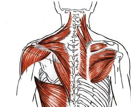 Mobility For Rowers Part 1 The Thoracic Spine Rowing Stronger