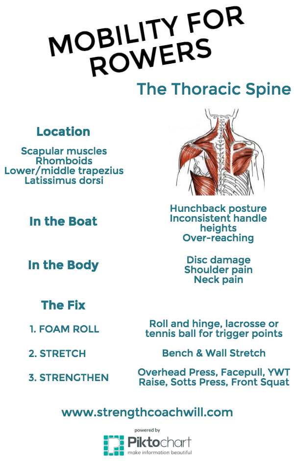 thoracic1